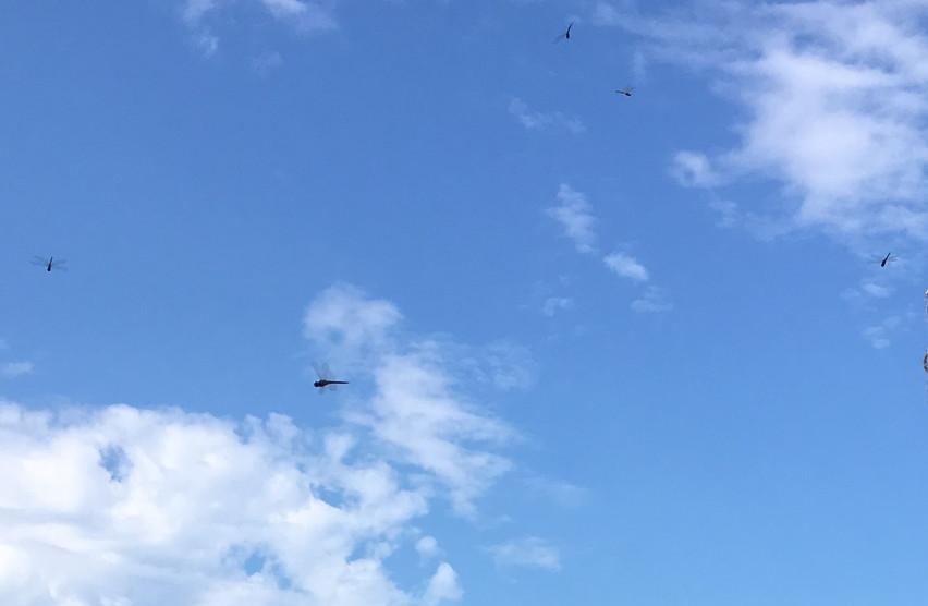赤とんぼの時期。9月焼津市ディスカバリーパーク