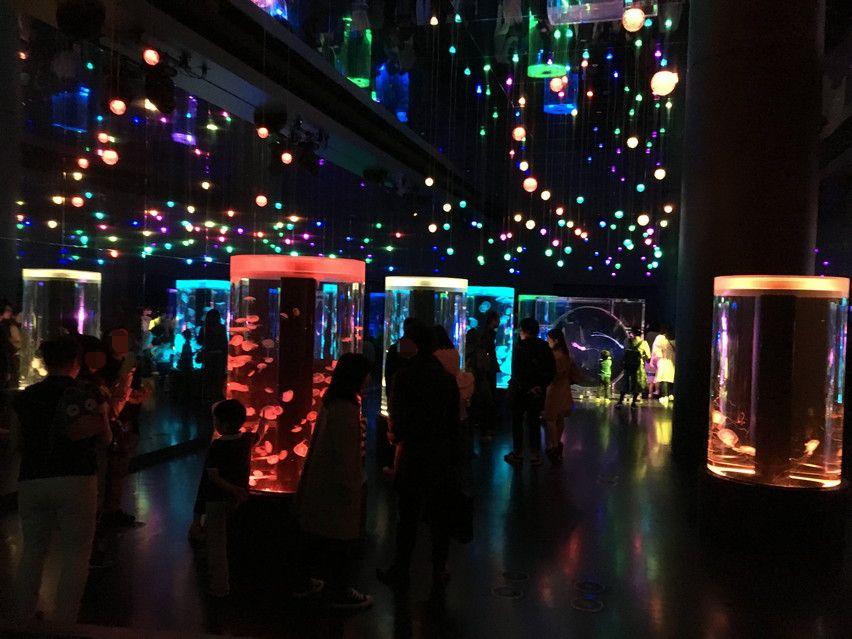 アクアパーク品川 水族館とイルミネーションと和の融合
