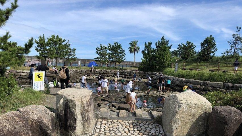 焼津を楽しむ親水公園ふぃしゅーなで子供と磯遊び・水遊び
