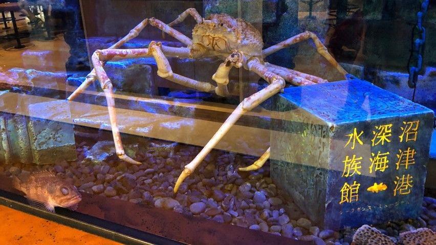 ららぽーと沼津にはタカアシガニ水槽を見ながら食事できる。深海水族館とコラボ