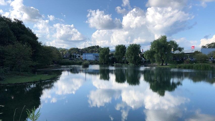 藤枝市青池公園に魚取りに行ってみましたが