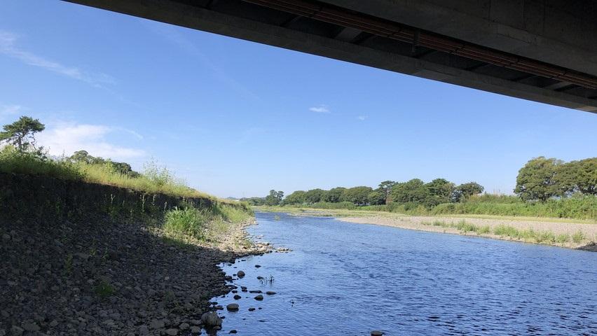 焼津瀬戸川の豊田橋から150号バイパスまで魚がいないか見てみました
