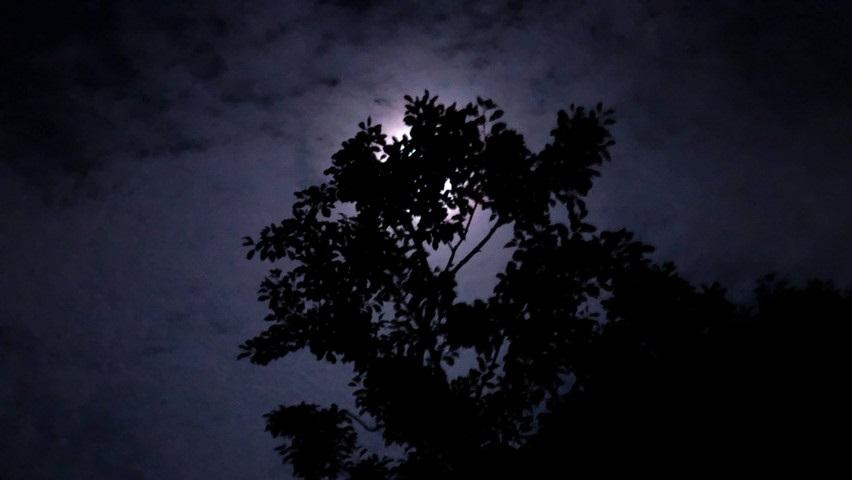 藤枝市でホタルを見に蓮華寺池公園5月下旬